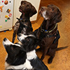 A Four Piece Dog Pack