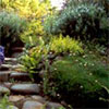 Stone Path and Steps