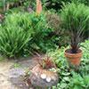 Pots and Ferns