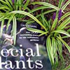 Special Plants